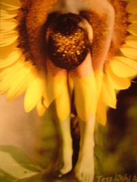 Sunflower_030_2